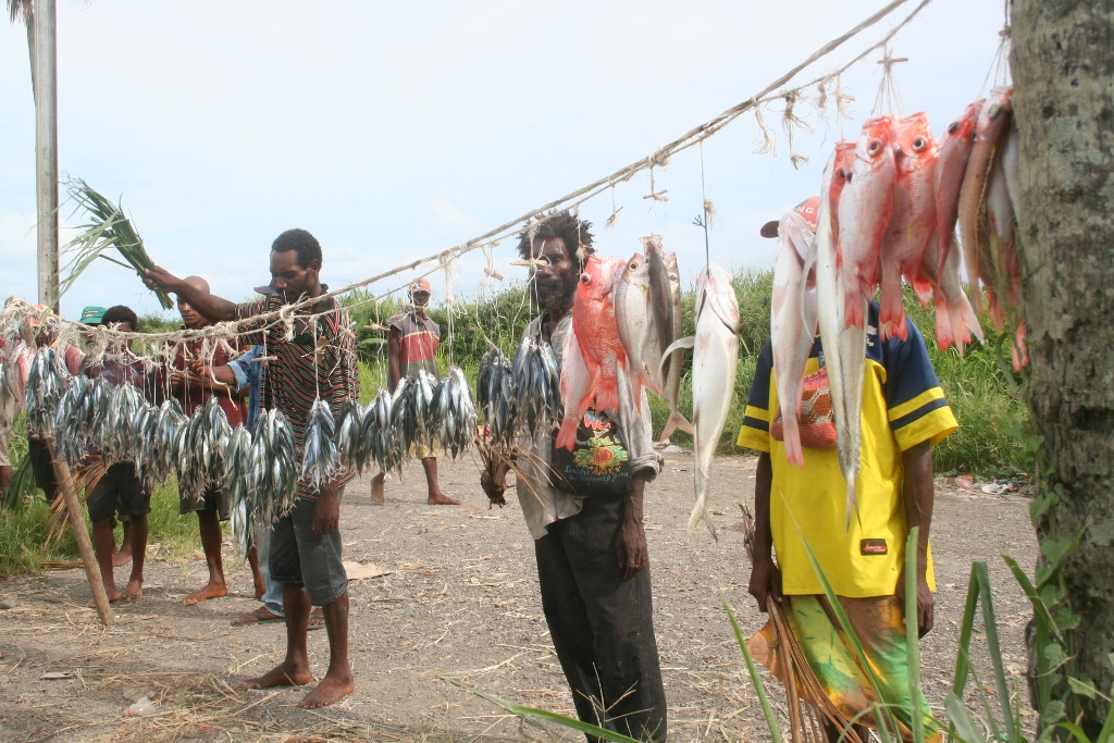 Lae Shopping Fish for Sale
