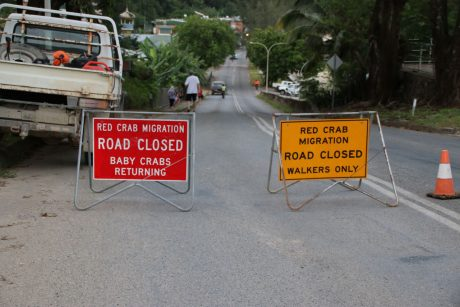 Christmas Island road closed for Red Crab Migration
